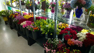 NEW PRICE For Flower & Gift Shop London Ontario image 2