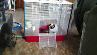Large rodent cage with ramp and accessories . Minus the cat lol