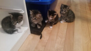 Kittens / delivery included