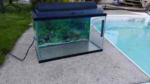 Small Aquariam Fish Tank Aquariam