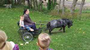 Pony and cart