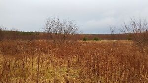 25 ACRES WORTH OF WILD BLUEBERRIES (This year's crop for sale)