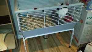 Lapin + cage et accessoires