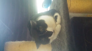 Cat needing to be rehomed
