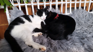 Pair of darling cats needing rehoming