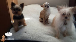 DAYCARE/SLEEPOVERS(SMALL DOGS)IN CAGE-FREE HOME SINCE 2010