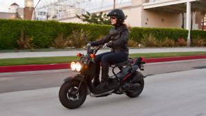New Honda Ruckus 50cc scooter!!