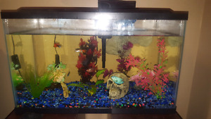 10 gallon fish tank/fish