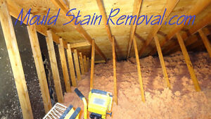 Mold Stain Removal - Attics -  Life Time Transferable Warranty.