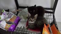 4 chatons à donner.