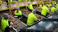 Produce Sorters/Quality Inspectors at $11.25/hour paid WEEKLY