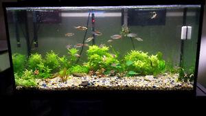 80 gal aquarium