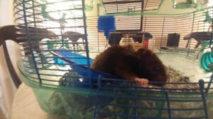 hampster cage shavings,accessories,& food