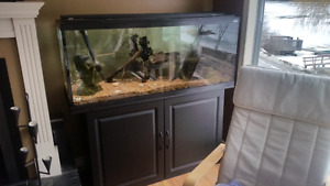 66 gallon fish tank with stand and filter