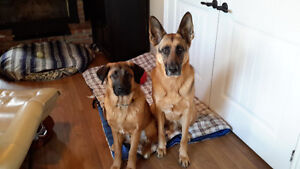 **** Cage Free Dog Care Available @ Prancing Paws Dog Sitting