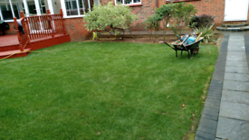 Cleanin overgrown gardens