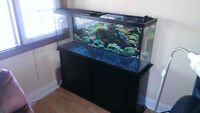 Fish Tank + Stand