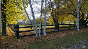 Looking horse farm near Montreal ? potential revenue 7500/month North Shore Greater Vancouver Area image 10
