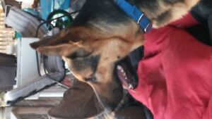 BKGSD Rescue has available for adoption