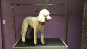 Professional Mobile Dog And Cat Grooming Over 30 Years Exp!!