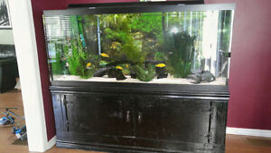 120 gallon fish tank and stand