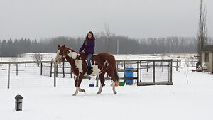 Well trained 19year old registered Paint gelding for sale