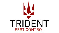 BED BUGS TREATMENT THAT WORKS!! CALL 416-892-6262