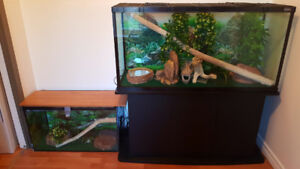 Terrariums & Corn Snake