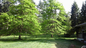 Large Acreage...NEW PRICE Campbell River Comox Valley Area image 5