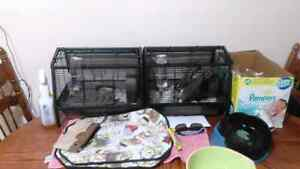 Two rat cages plus bit of bedding 80$