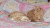 in search of loving-forever home for two brother cats