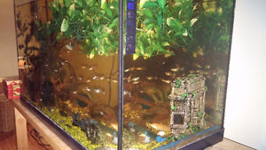 Fish aquariums and fish for sale