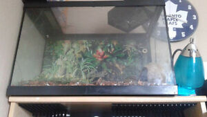 Rose Hair Tarantula & Tank