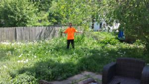 Lawn Cut & Trim $30/visit