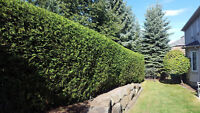 Hedge Trimming- schedule today!