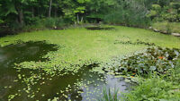 Weed Clearing in Pond