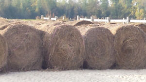 HAY FOR SALE 4 x 5