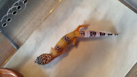 Leopard Gecko Baby - Hypo Carrot Tail With Het.