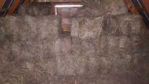 2015 hay may be suitable for beef cows