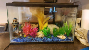 10g fish tank. Comes with everything