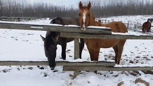 Two Awesome Yearling Colts!!