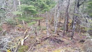 WOODLOT WANTED FOR HUNTING CAMP.