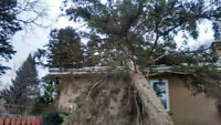 Professional tree and stump removal 647-704-0175.
