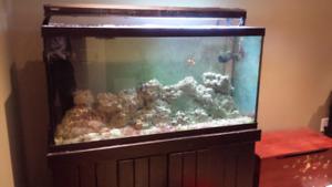 100 Gallon Saltwater Aquarium
