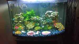42 gallon fish tank