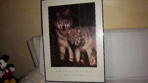 Wolf  Pictures Kitchener / Waterloo Kitchener Area image 4