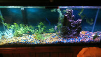 55 GAL fully operational fish tank and wood stand- complete set