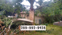 TREE SERVICE  289-992-9428 REMOVALS, CLEAN UPS, STUMP,CHIPPING.
