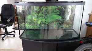 40 gal aquarium, stand, and accessories. - Not in Parkland Cnty