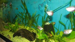 TROPICAL FISH 2 for 1 SALE on selected fish